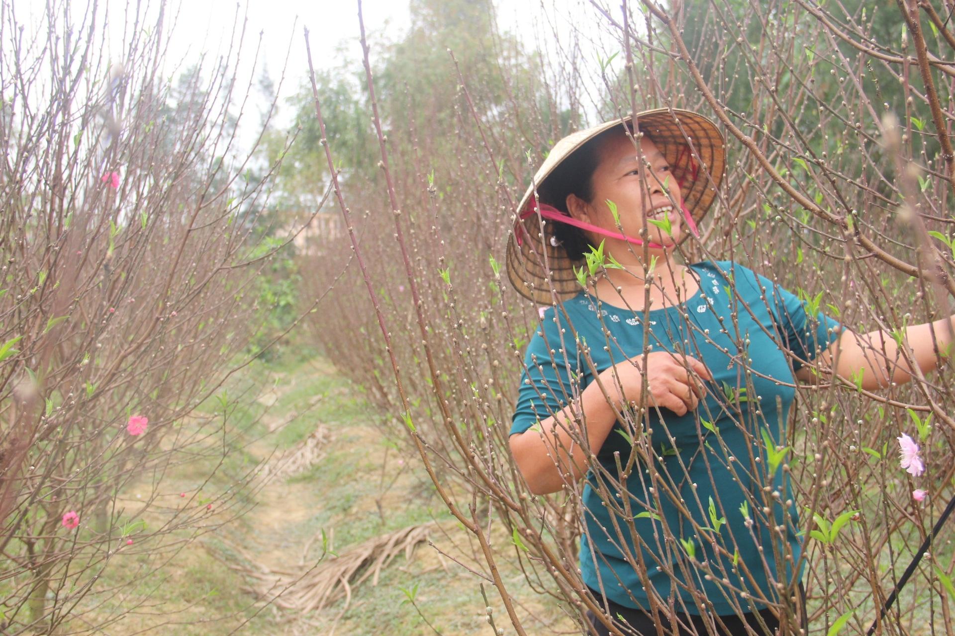 Đào Thạch Quý có nhiều lộc rất phù hợp với tâm lý mua đào của người dân Hà Tĩnh