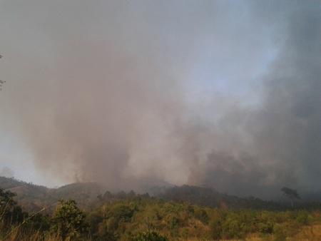 Khu rừng tiểu khu 253 mới bị cháy năm 2010, nay bị cháy lại