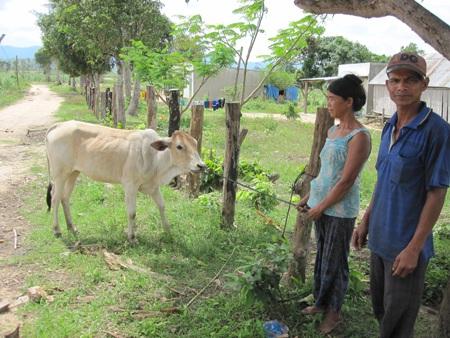 Bà Phenh vui mừng nhận bò