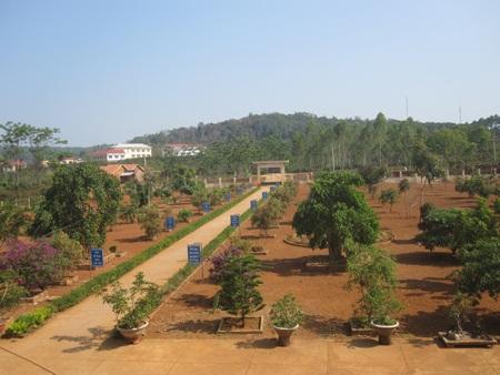 Sân trường TH Đăk Rong với hệ thống cây cảnh thẳng hàng trông rất đẹp