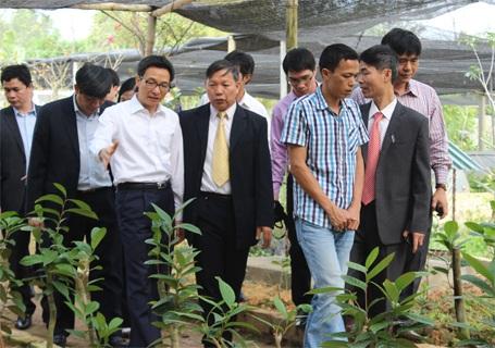 Phó Thủ tướng Vũ Đức Đam thăm một vườn trồng cây thuốc nam trên địa bàn huyện Tam Đảo