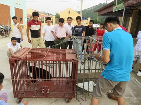 Chú gấu chó này được tịch thu từ 1 vụ buôn lậu hồi tháng 2/2015
