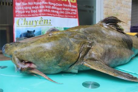 Miệng cá khá lớn