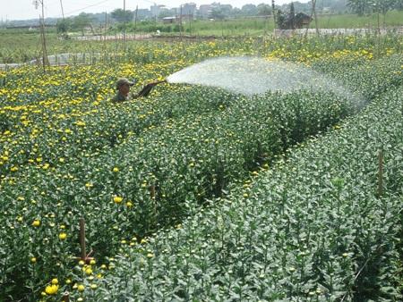 Để có những bông hoa tươi đẹp đòi hỏi sự khéo léo của đôi bàn tay và sự kiên trì của người trồng