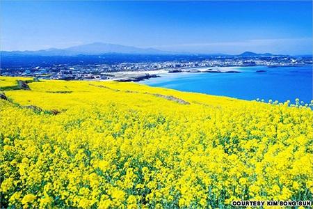 15 cảnh đẹp mê hồn không thể bỏ qua khi đến xứ Kim chi
