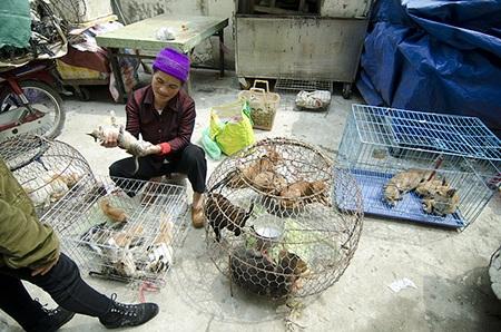 Rất nhiều các loài chim, cây cảnh được bày bán trên phố Hoàng Hoa Thám