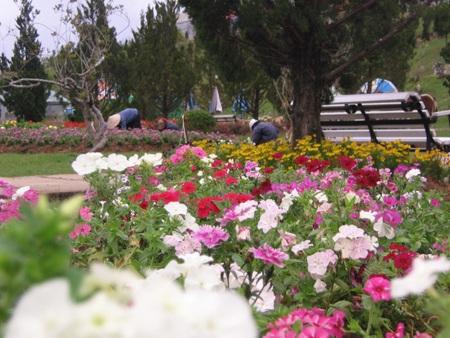 Tại khu triển lãm hoa, Đà Lạt sẽ xây dựng thành khu vườn cổ tích dân gian Việt Nam