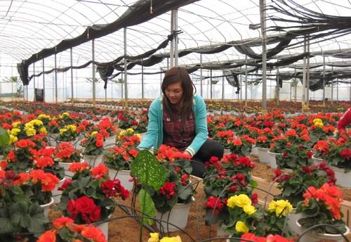 Các làng hoa đang tích cực chuẩn bị cho Festival Hoa Đà Lạt lần thứ 5
