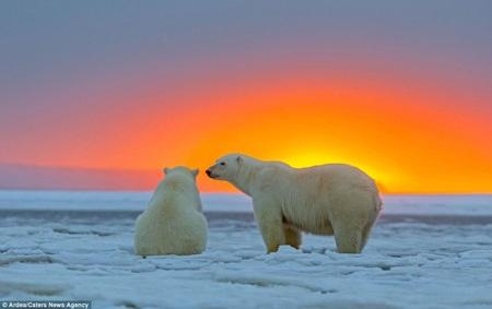 Gấu mẹ dường như cũng thoải mãi ngồi ngắm hoàng hôn