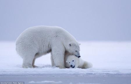 Hai mẹ con gấu tình cảm bên nhau chờ khi đêm xuống