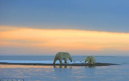 Gấu mẹ cùng 2 con chơi đùa trong tuyết