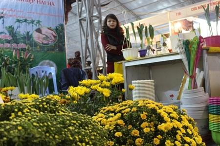 Cùng với Lan những bông cúc vàng cũng theo nhau xuống phố đón xuân với người dân Hà Nội