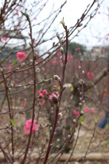 Mùa xuân ở miền quê