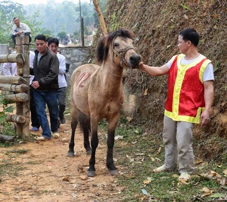 Dắt ngựa vào thi đấu