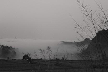 Sương giăng trên những đồng chè, đồng cỏ xanh mềm như dải lụa