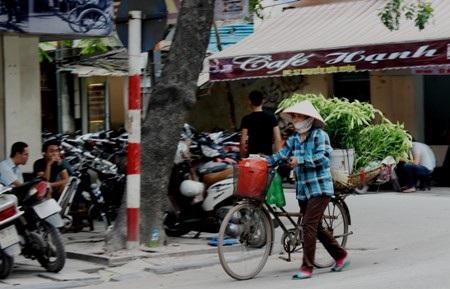 Giữa con phố nhộn nhịp, chúng ta lại dễ dàng bắt gặp những chiếc xe hoa loa kèn đẹp đến nao lòng