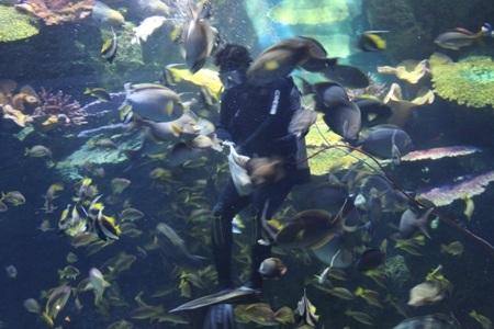 """""""Đứng tim"""" khi cá mập tấn công từ trên đầu"""