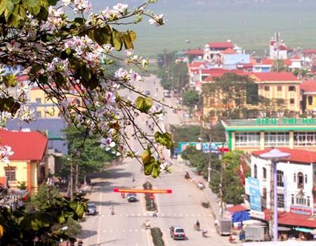 Hoa ban, một loài hoa dễ gặp trên đường phố Điện Biên