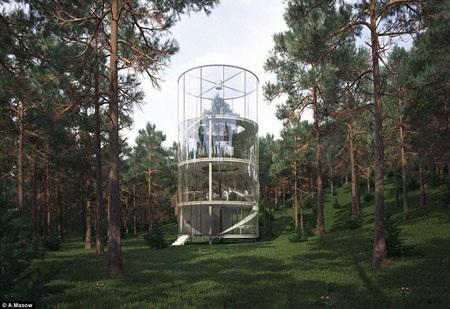 Căn nhà tọa lạc giữa rừng thông xanh mát