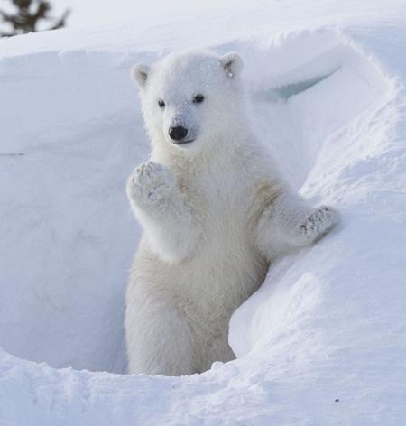 Khoảnh khắc chú gấu giơ tay chào du khách