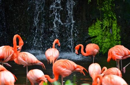 Vườn chim Jurong, một địa chỉ tuyệt vời dành cho các bạn