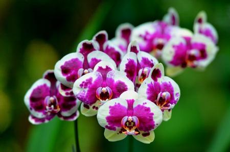Đừng quên ghé thăm vườn lan để tận mắt ngắm nhìn những loại hoa lan đẹp nhất thế giới