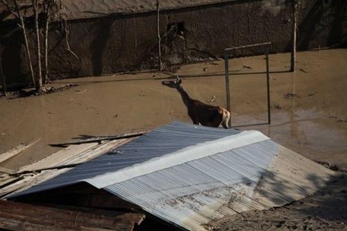 Một con hươu đang lội bì bõm trên con đường ngập bùn lầy