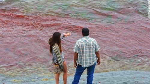 Những con sóng đỏ rực mang theo cua vào bờ