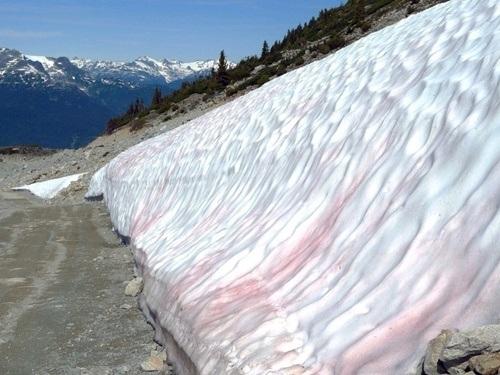 Với các du khách, màu tuyết hồng đỏ là điều kỳ diệu của tự nhiên để khám phá vùng đất này.