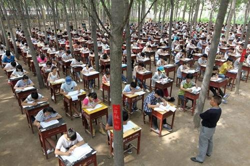 Theo hiệu trưởng nhà trường, tổ chức thi trong rừng mang lại nhiều lợi ích cho học sinh.