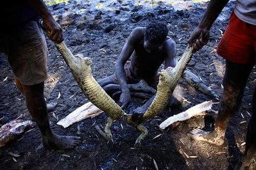 Những người thợ săn tiến hành xẻ thịt cá sau buổi săn bắt.
