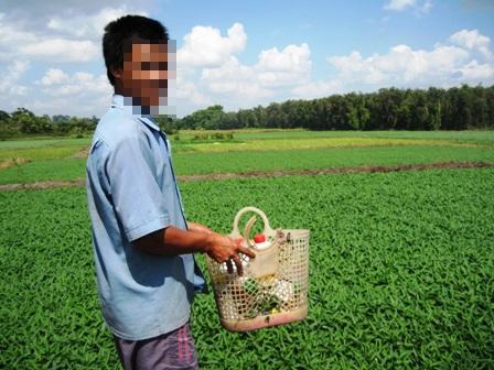 Cánh đồng rau muống xanh mướt ở ngoại thành thị xã Thủ Dầu Một