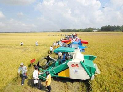 Cần nhiều nỗ lực để đẩy mạnh tái cơ cấu nông nghiệp (Ảnh minh họa)