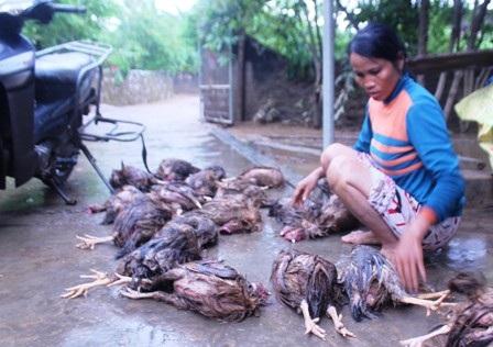 Cứu trợ vật nuôi trong thiên tai chính là cứu trợ con người