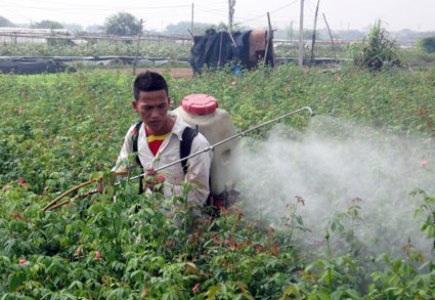 8.5% nông dân khẳng định đã từng bị ngộ độc trong khi sử dụng hóa chất (Ảnh minh họa)