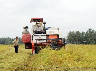 Ở ĐBSCL đang là thời điểm thu hoạch rộ lúa Đông - Xuân chính vụ (Ảnh minh họa).