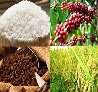 Giá trị xuất khẩu gạo và cà phê của Việt Nam còn thấp (Ảnh minh họa)