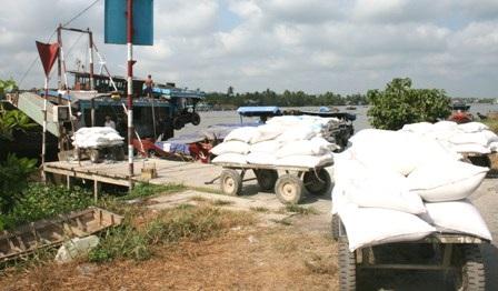 Các doanh nghiệp tại Cần Thơ đang đẩy nhanh tiến độ thu mua tạm trữ.