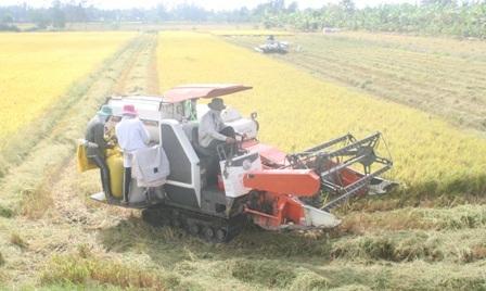 Nông dân Hậu Giang thu hoạch lúa