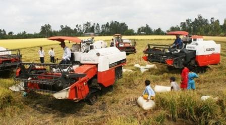 ĐBSCL đang cần tái cơ cấu sản xuất lúa gắn với thị trường