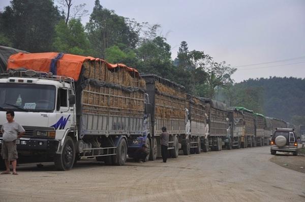 Xe hàng nông sản bị ách tắc kéo dài tại cửa khẩu Tân Thanh, Lạng Sơn.