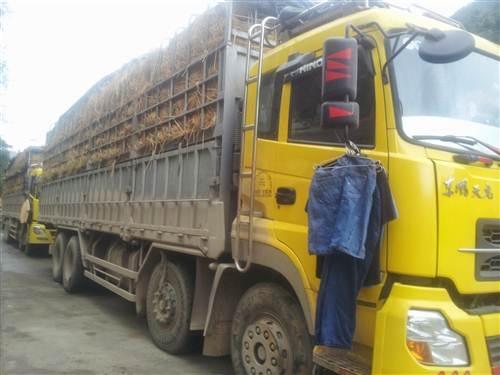 Nhiều lái xe phải sinh hoạt, ăn uống tại chỗ sau nhiều ngày nằm chờ tại cửa khẩu.
