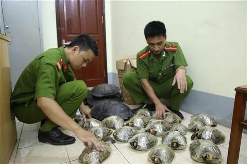 Công an huyện Cao Lộc đã phát hiện và bắt giữ gần trăm kg rùa quý hiếm.