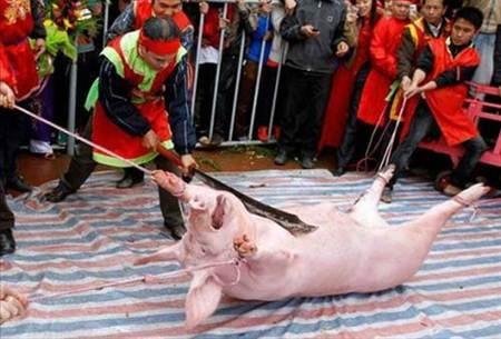 Từ mùa lễ hội năm nay tục Chém lợn sẽ được điều chỉnh thành Rước lợn.