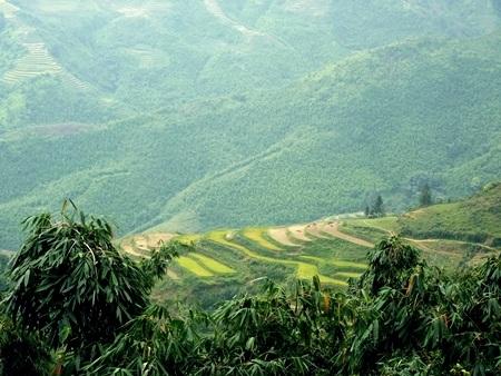 Lúa chín vàng khắp những khu ruộng bậc thang ở bản Dền, xã Bản Hồ.