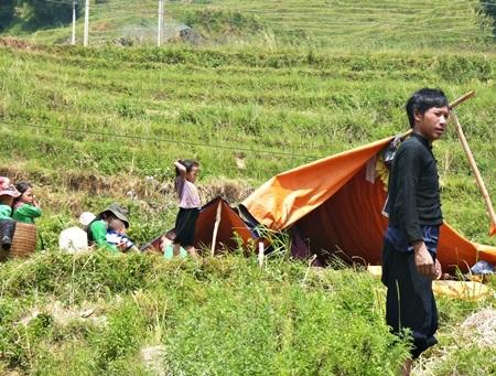 Dựng lều giữa ruộng bậc thang để cả nhà có chỗ trú chân trong mùa gặt.