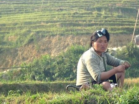 Se sợi trên khu ruộng vừa qua vụ gặt.
