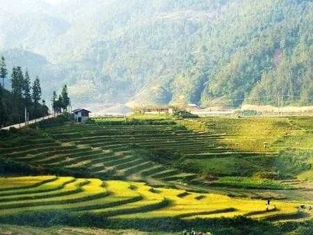 Tấm thảm khổng lồ giữa núi rừng Tả Phìn.