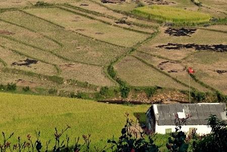 Ngôi nhà nhỏ được bao phủ bởi màu vàng của lúa.