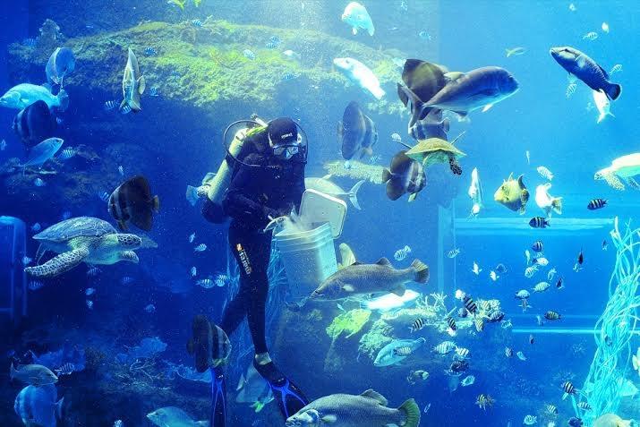 Màn trình diễn cho cá ăn đầy lí thú mỗi ngày tại thủy cung.